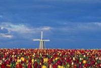 Windmill with Tulips Fine Art Print