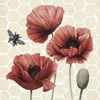 Poppy Buzz I Framed Print