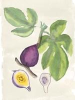 Watercolor Fruit I Fine Art Print