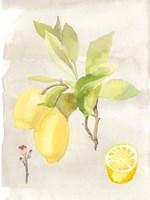 Watercolor Fruit II Fine Art Print