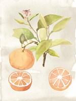 Watercolor Fruit V Fine Art Print