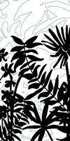 Rainforest Ferns II Fine Art Print