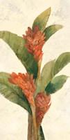 Ginger Blossom on White Fine Art Print