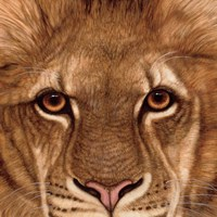 Eyes of the Lion Fine Art Print