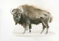 Buffalo Bill Fine Art Print