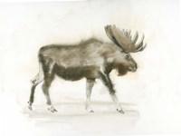 Dark Moose Fine Art Print