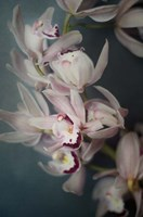 Dark Orchid I Fine Art Print