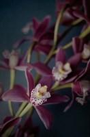 Dark Orchid III Fine Art Print