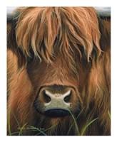 Cow Portrait Fine Art Print