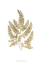 Graphic Gold Fern II Fine Art Print