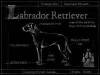 Blueprint Labrador Retriever Fine Art Print