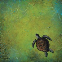 Slow and Steady Fine Art Print