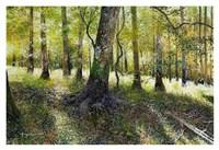 Little Econ River Fine Art Print
