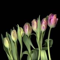Parrot Tulips 3 Fine Art Print