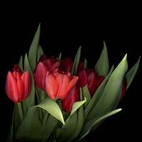 Red Tulips 5 Fine Art Print