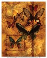 Evocation Of Butterflies Fine Art Print