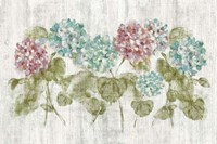Vibrant Row of Hydrangea on Wood Fine Art Print