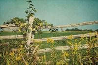 Blissful Country V Fine Art Print