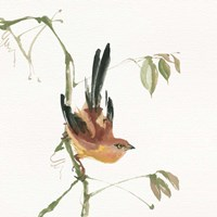 Mountain Bush Warbler Fine Art Print