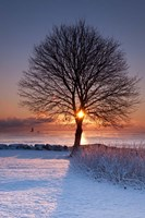 Sun In Tree Fine Art Print