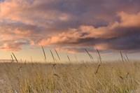 Beachgrass Sunrise Fine Art Print