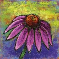 Echinacea Fine Art Print
