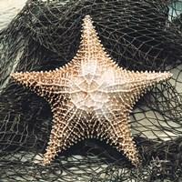 Starfish with Net Fine Art Print