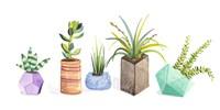 Succulent Display I Fine Art Print