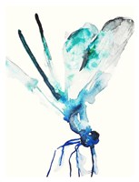 Blue & Green Dragonfly Fine Art Print