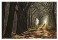 Paths Fine Art Print