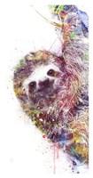 Sloth Fine Art Print