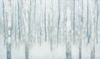 Birches in Winter Blue Gray Fine Art Print