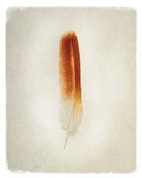 Feather II Fine Art Print
