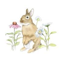 Wildflower Bunnies IV Framed Print