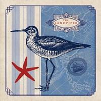 Sea Bird II Fine Art Print