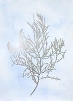 Silver Foil Algae III on Blue - Metallic Foil Framed Print