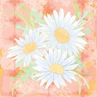 Daisy Patch Coral II Fine Art Print