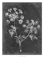 Slate Floral I Framed Print