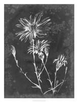 Slate Floral III Framed Print