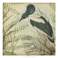 Heron & Ferns I Framed Print