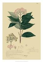 Descubes Tropical Botanical I Fine Art Print