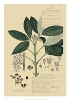 Descubes Tropical Botanical II Fine Art Print