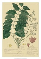 Descubes Tropical Botanical III Framed Print