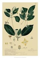 Descubes Tropical Botanical IV Framed Print