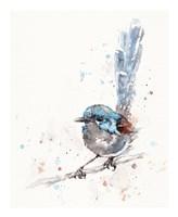 Mischief in the Making (Variegated Fairy Wren) Fine Art Print