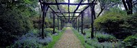 Garden path, Old Westbury Gardens, Long Island Fine Art Print
