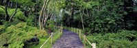 Tea Garden Walkway, San Francisco Botanical Gardens Fine Art Print