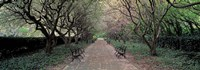 Through Conservatory Garden, Central Park, NYC Fine Art Print