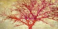 Coral Tree Fine Art Print