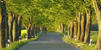 Lime Tree Alley, Mecklenburg Lake District, Germany Fine Art Print